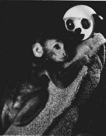 小猴和假妈妈 src: Harlow 1958